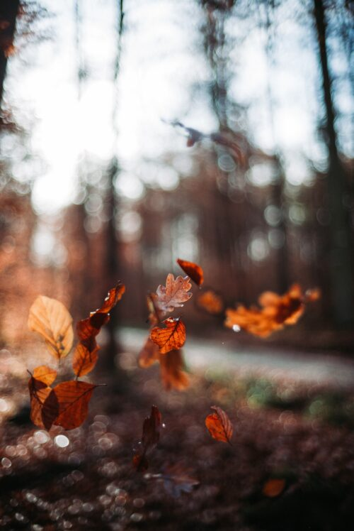 Sustainable Tips to Get You Through Autumn